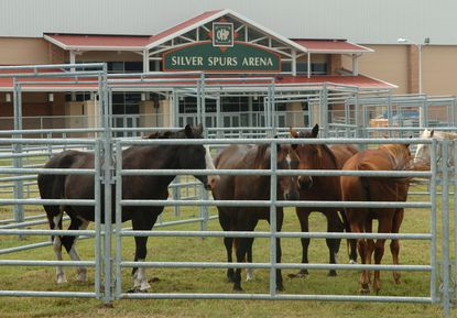 Osceola Heritage Park attracts rodeos, classic car auctions and music fesitvals, but the lack of a business hotel on site makes it a tough sell for conventions. (Dennis Wall/Orlando Sentinel)