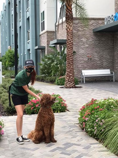 Dog walking is one of many services offered by Valet Living property managers at the recently completed Urbon Apartment Homes in Orlando's Audubon Park neighborhood.
